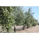Aceite de oliva virgen extra Aubocassa