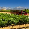Mallorca, Wein-Tour mit dem Zug