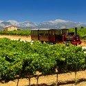 Mallorca, wine by train tour