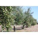 Natives Olivenöl extra 500 ml Solivellas