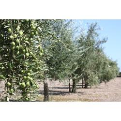 Extra virgin olivolja 500 ml Solivellas