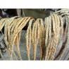 Slings - Mallorca vegetabilske fibre slynger (Cactus Pita) og espartogræs